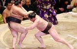 相撲有啥好看的?相撲選手在日本備受推崇,什麼壽命普遍較短?