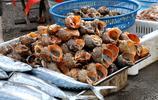 大風吹來好口福 青島早市刀魚12一斤 鼓眼魚35 買太多腰扛不住