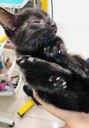 連天大雨,流浪奶貓從鐵棚摔落,被救後很喜歡站肩膀上