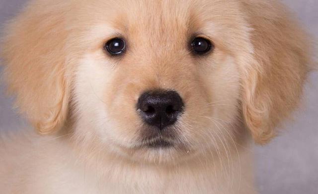 狗狗分辨人的方法,其實有這三個,主人不用擔心它找不到自己
