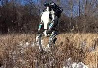 軟銀確認收購Google母公司旗下機器人公司