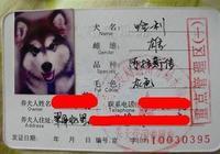 為什麼中華田園犬不能辦狗證?網友:只能養外國狗了?