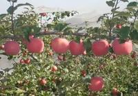 世界蘋果中心 助力蘋果產業鏈一體化