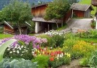 有生之年,願有一院,種菜,與家人一起, 日出而作,日落而息