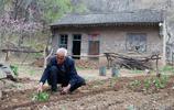 山西農村7旬老人移植深山1種稀罕物,象蟲草一樣珍貴,看看是啥