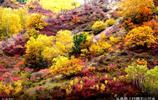 金秋時節的烏蘭布統草原,一幅美麗的畫卷