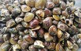 """禁漁期貝類成市民餐桌主角,一種叫""""海鮮""""的貝類15一斤,受歡迎"""
