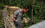 拒絕城裡繼續謀生,陝西一隻手男子攜妻帶子回農村,靠種養髮了財