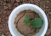 盆土板結了,彆著急,'1根塑料吸管'輕鬆幫助你解決,真萬能