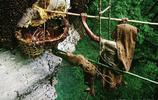 直擊百米懸崖上的採蜜人,每天直面生死,月賺5000