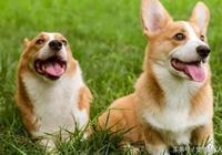 為何給狗狗做了驅蟲,跳蚤還是不斷?原來根源在這裡!
