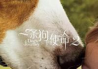 看《一條狗的使命2》哭成汪,人寵關係的電影為何引起觀眾共鳴?