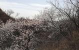北京這處非著名景區為何這麼多遊客?如雪花樹、粉紅杜鵑花正盛開