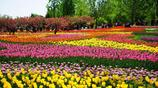 攝影圖集:來感受初春的五彩花香——北京香山邊的植物園