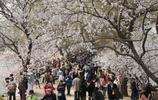 春光明媚頤和園