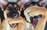 汪星人自產表情包,愛狗的朋友趕緊收藏了