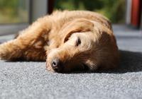 狗狗不說話,但它會通過這5個動作,向狗主人求救