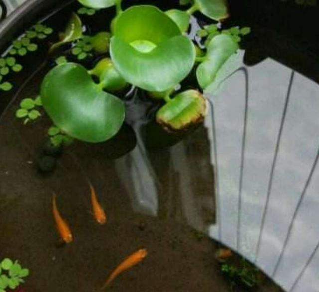 新魚到家一個月之內換水不困水,這些疾病避免不了!