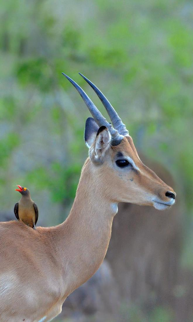 動物圖集:各類動物,動物世界?