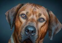 狗狗這四個習慣,是什麼原因,原來我們一直誤會狗狗了