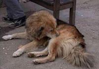 家裡狗狗已經20歲了,最後時刻放心不下主人,碰頭約定來生相見