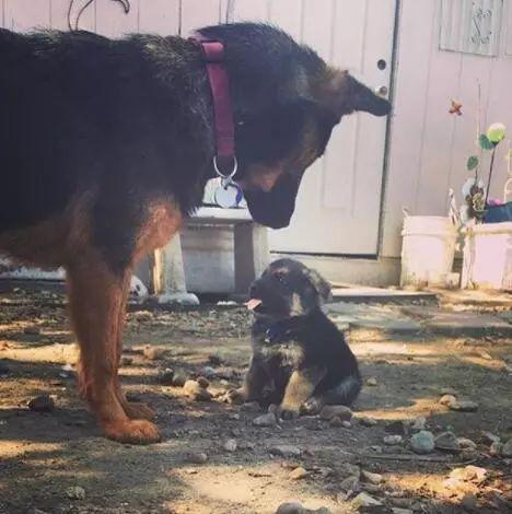 有些狗根本不會帶娃,在孩子面前丟盡了臉!