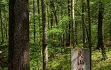 「原創」天然避暑勝地:世界地質公園鏡泊湖火山口國家森林公園