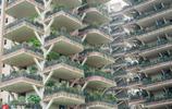 """長樹的建築來了!成都這個小區家家戶戶陽臺有""""一座森林"""""""