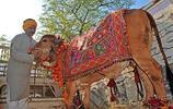 印度男了拋妻棄子與牛結婚,稱與牛是同類