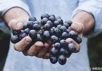 白葡萄酒還是紅葡萄酒?釀酒的葡萄還是食用的葡萄?