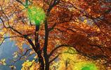 紅葉染太行,秋景美如畫,鏡頭裡的它竟然這麼美