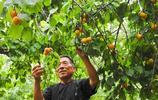 江蘇農民開荒三年,栽植7畝杏園,年入數萬,有老闆出20萬他不賣