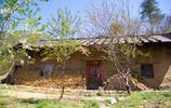 秦嶺寧陝千柏樹溝|二里地後有一棟老房子,四周開滿了桃花櫻桃花