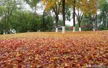 攝影:湖北宜昌東山公園冬日裡秋色美,層林盡染迎來最美季