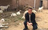 河南80後小夥從貧困戶到帶頭人,辦養雞場,開淘寶店,年入幾十萬