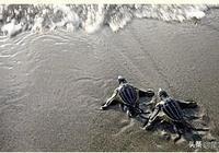 烏龜的進化史,與我們想象的不太一樣!