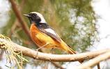 公園拍鳥——誰告訴我鳥的名字