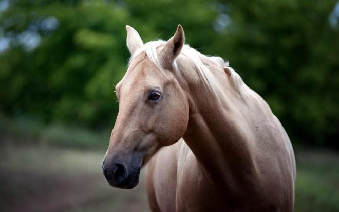 動物圖集:動物攝影