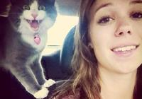 照片證明貓主子覺得自拍是非常愚蠢的事,最後一張完全讓人笑翻!