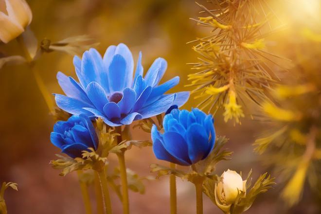 鮮花攝影,只要用心去感受,生活處處是美景