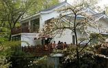 鬱金香與櫻花風景實拍(杭州太子灣公園)