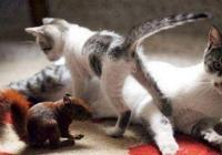 貓媽媽把松鼠寶寶當孩子,看著畫面好酥啊