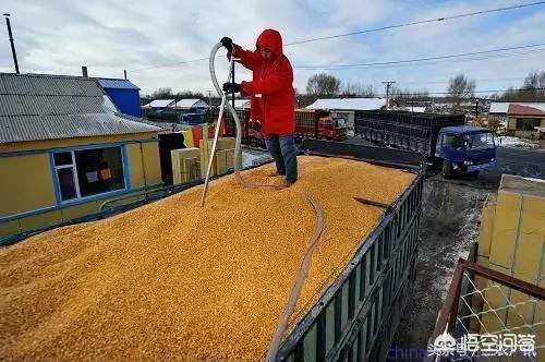 有專家稱今年下半年我國玉米的價格將有望突破一元大關,這真的可信嗎?對此你怎麼看?