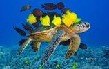 動物圖集:水生動物大圖 動物的世界