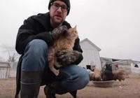 整天被同伴胖揍欺負,這隻慫貨橘貓萬般無奈竟跑去做雞