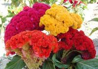 上聯:花是花,色是色,花皆是色,下聯怎麼對?