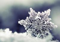 詩歌:雪(文 / 青若)