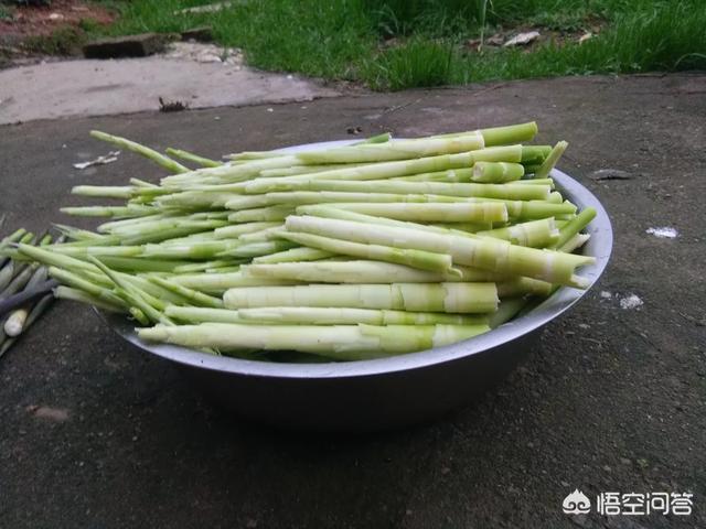 穀雨後,農村山裡還有小竹筍可以挖嗎?