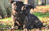 四方框框|真愛無界限!當西高愛上洛威拿~孕育全新犬種