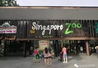 """新加坡動物園——第一次讓我領略到什麼是""""動物園""""!"""